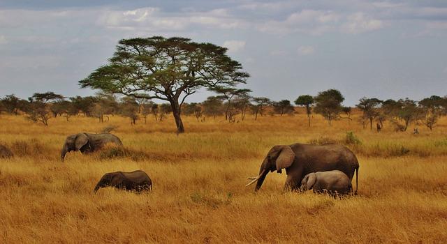 tanzanie-serengeti-elephants