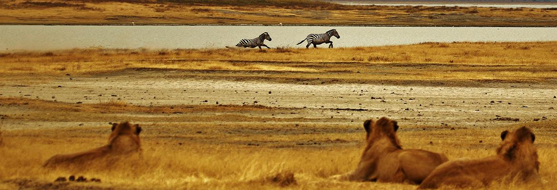 Un séjour inoubliable en Tanzanie